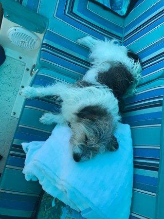 Hamilton, Bermuda: Benny chilling!