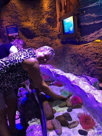 SEA LIFE Orlando Aquarium (FL): Top Tips Before You Go ...