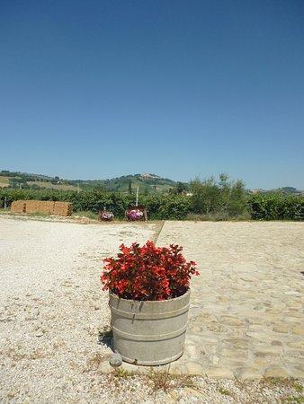 Ortezzano Photo