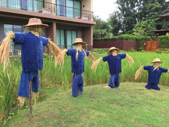 Siripanna Villa Resort & Spa: Rice fields