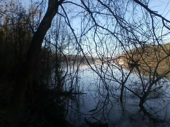 Bristol, ฟลอริด้า: View of the river through the naked tree branches during a visit in February.