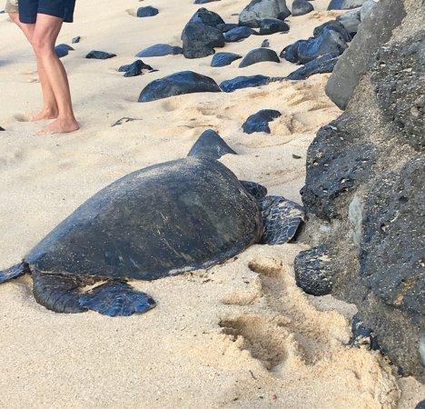 Paia, Hawaje: photo0.jpg