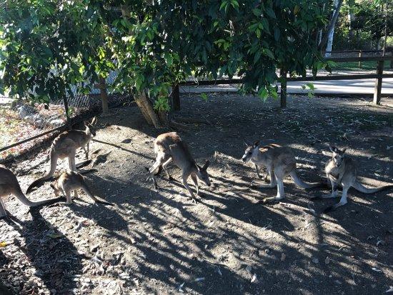 Zoo y Jardines Botánicos de Rockhampton: photo1.jpg