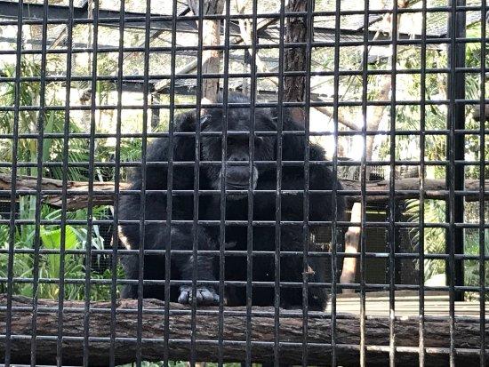 Zoo y Jardines Botánicos de Rockhampton: photo2.jpg
