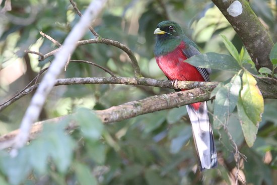 Thornleys Guest House: Narina Trogon close to the guesthouse