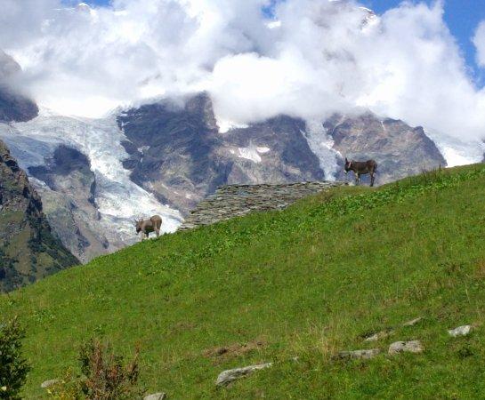 Riva Valdobbia, Italia: IMG_20170903_163312_630_large.jpg