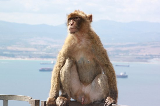 Gibraltar Official Tours