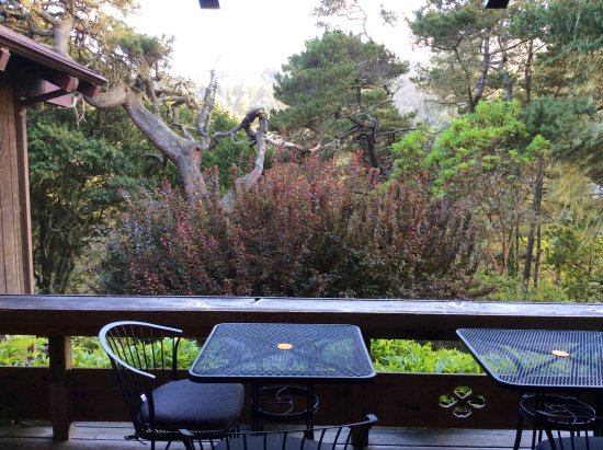 Osprey Peak Bed & Breakfast: Enjoy looking into the wild Bishop pine forest from the main deck