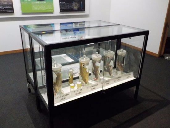 Kunimasu Museum