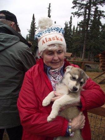 ALASKA DENALI HUSKY HOMESTEAD CUDDLING A PUP Picture Of - Husky homestead