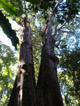 Canungra, Australia: photo2.jpg