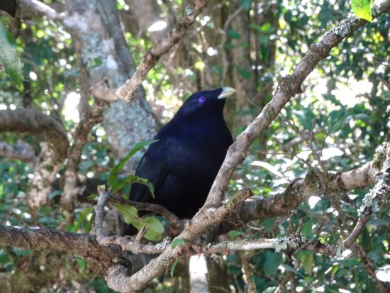 Canungra, Australia: photo6.jpg