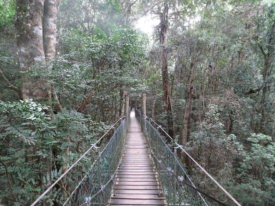 Canungra, Australia: photo7.jpg