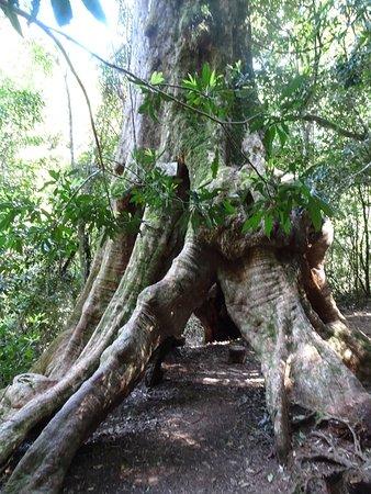 Canungra, Australia: photo9.jpg