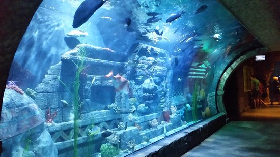 Downtown Aquarium (Houston, TX): Top Tips Before You Go ...