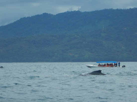 Dolphin Tours: Humpback whale mum and baby :)