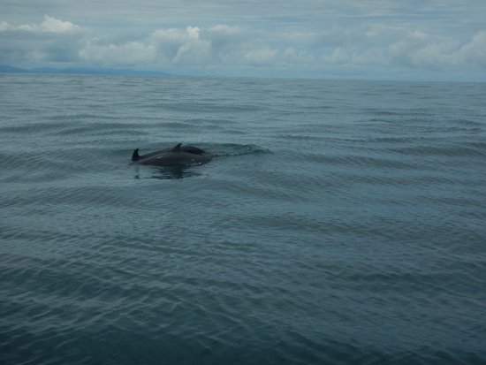Uvita, Costa Rica: Mum and calf