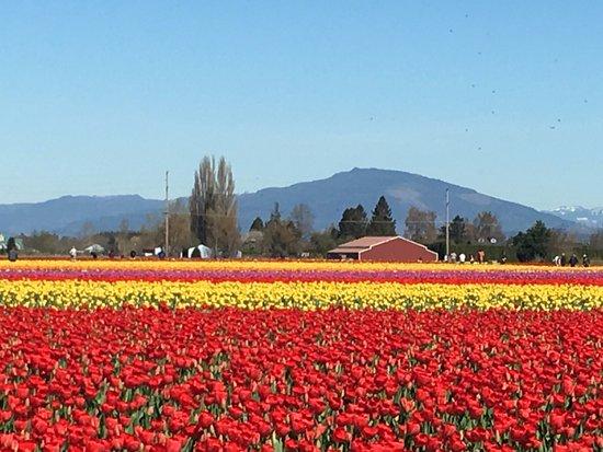 Mount Vernon, WA: Fields at Roozengarden