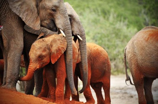 8 jours de safari sauvage au Kenya