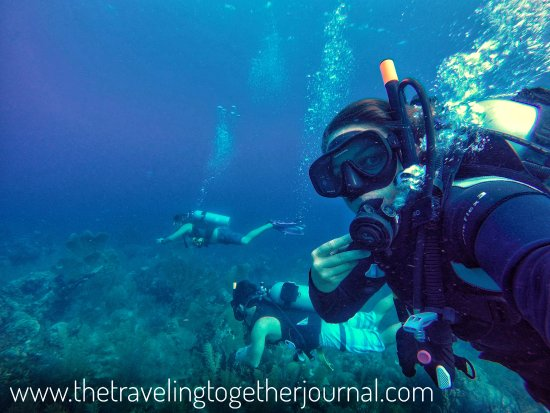 Our fun first dive as padi certified divers - Picture of Utila Dive ...