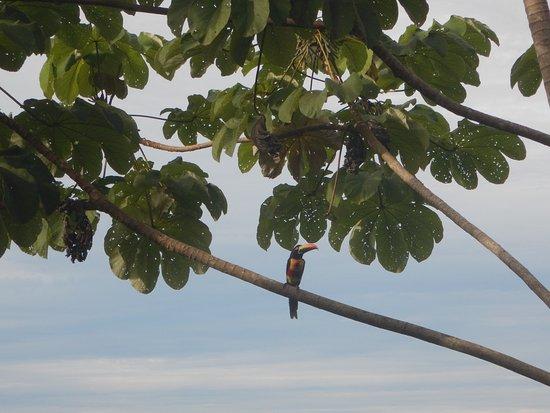 TikiVillas Rainforest Lodge & Spa: Toucan out of the villa!