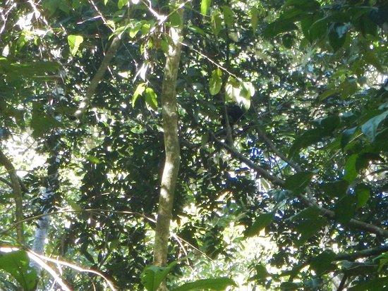 TikiVillas Rainforest Lodge & Spa: Monkeys in the trees :)