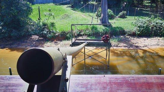 Semanggol, Malásia: feeding the orang utans