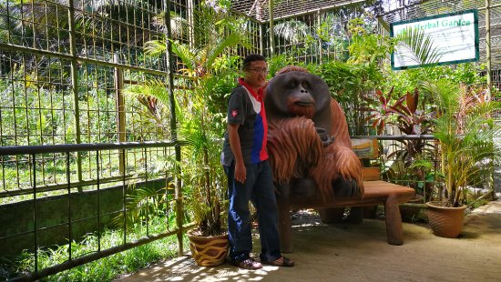 Semanggol, Malesia: this is real size orang utan. he died and a statue of him was erected.