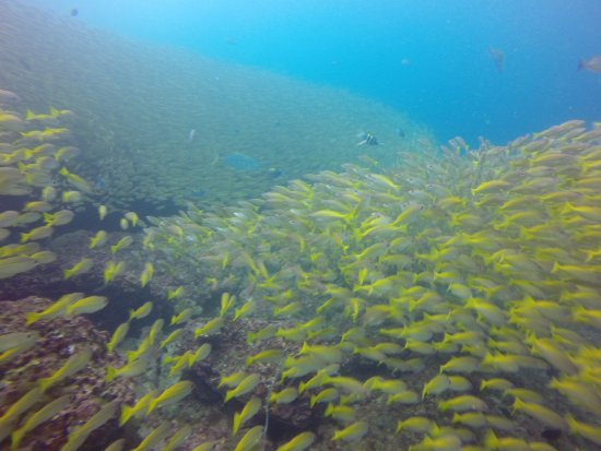 Love Diving Phuket: Thousand of fishes diving with us amazing