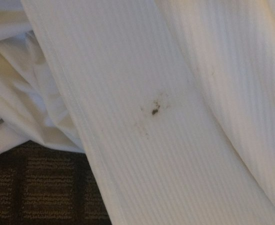 Royal Sonesta Harbor Court Baltimore : Checked in and feces was on the blanket. Nasty