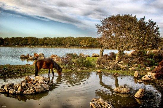Cavallino della Giara di Tuili