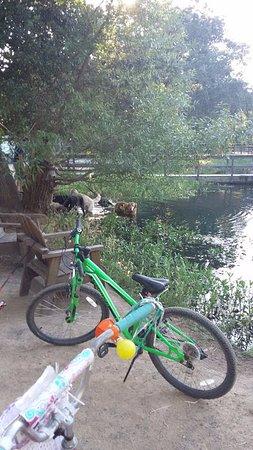 Cloverdale, CA: Bike riders