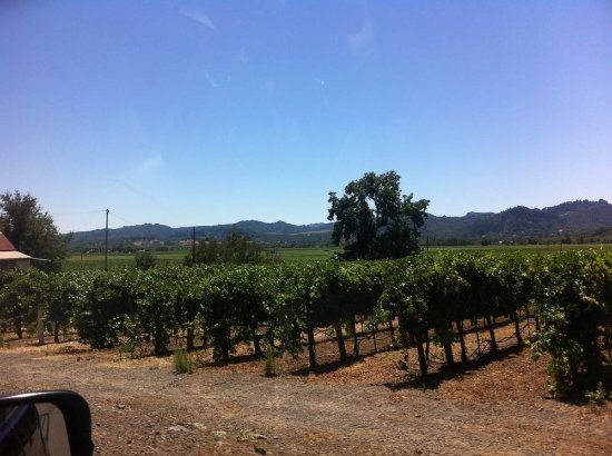 Cloverdale, Kaliforniya: Vine yards