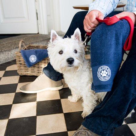 Mullion, UK: Dog Friendly