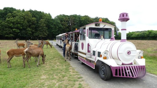 Safari Train -Reserve de Beaumarchais