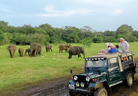 Minneriya Safari Tours: minneriya National Park safari