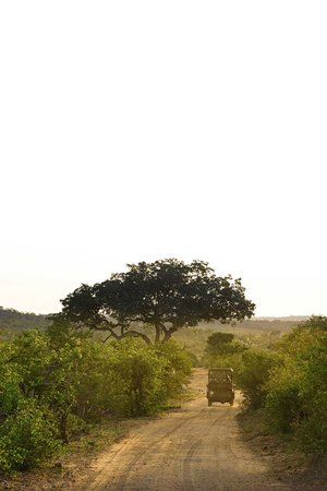 Balule Nature Reserve ภาพถ่าย