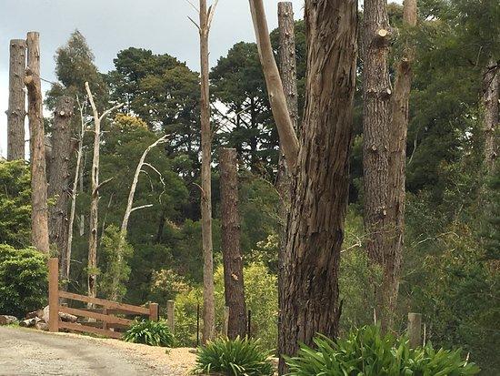 Narre Warren, Australia: Jessie Traill Nature Reserve