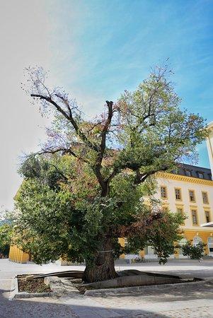 Sliven, Bulgaria: 20170907205208_IMG_4881-01_large.jpg