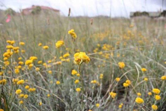 Cairnlea, Австралия: Iramoo Wildflower Grassland Reserve