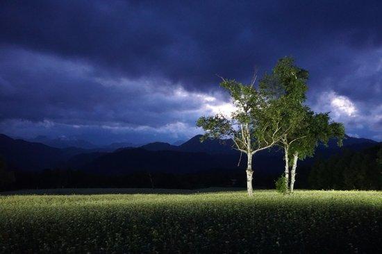 Takatsue Sobabatake: ライトアップされたそば畑