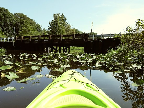 Queen Anne, Мэриленд: Kayaking among the lily pads in Tuckahoe State Park.