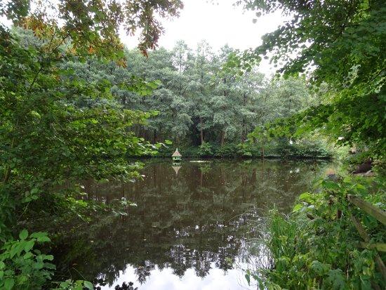 Bad Stuer, ألمانيا: Vue de l'étang devant l'hôtel