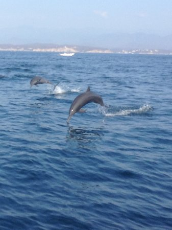 Fishing with tico huatulco crucecita mexico top tips for Deep sea fishing santa cruz