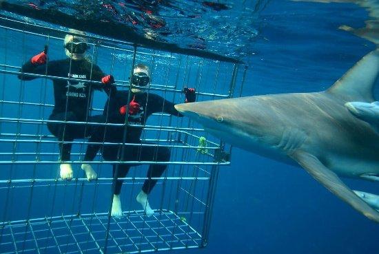 Shark Cage Diving KZN: photo3.jpg