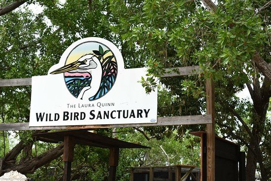 Tavernier, FL: Florida Keys Wild Bird Rehabilitation Center