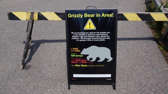 Mount Revelstoke National Park: Warnschilder gab es viele, Bären keine zu sehen