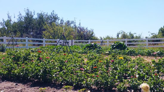 Fish Haven, ID: The owners garden where food goes from garden to table!