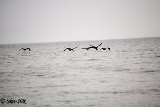 Depoe Bay, Oregón: Water birds