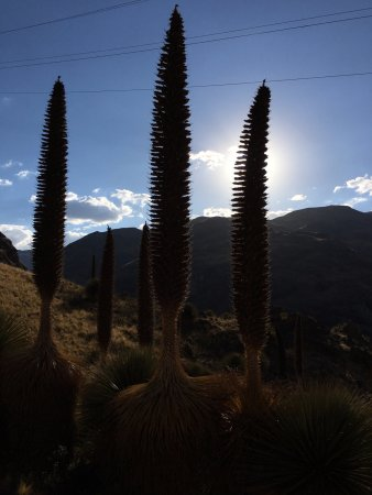 Huancavelica, Peru: The sunset behind the giant flowers